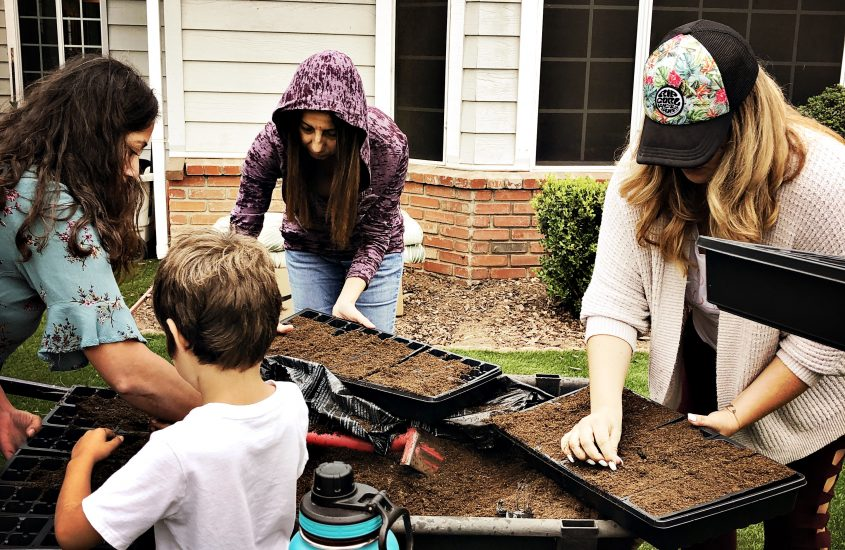 Fall Seed-Starting in San Diego