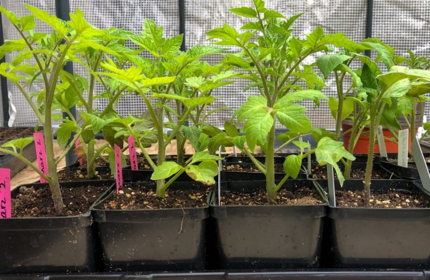 How to Sell Seedlings